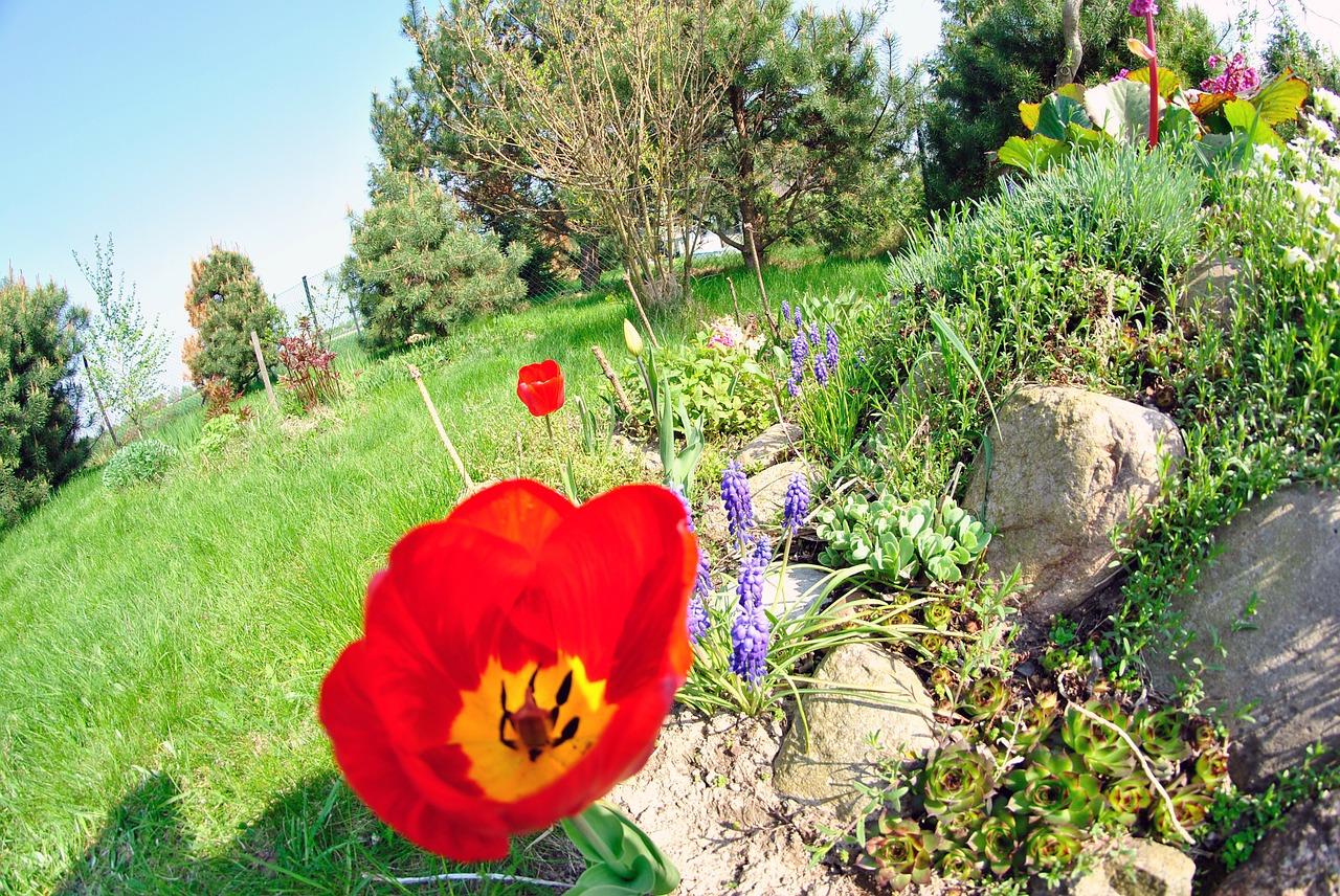 garden-256379_1280.jpg