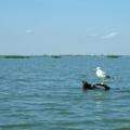 Tiszaörvény - Óhalász túra