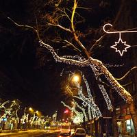 Csillagdömping és óriásrovarok Budapesten