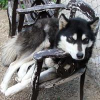 Sziesztázó kutya 2