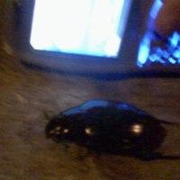 Ronda nagy bogarak a belvárosban
