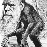 Sikoly a peremről I.: Majmok