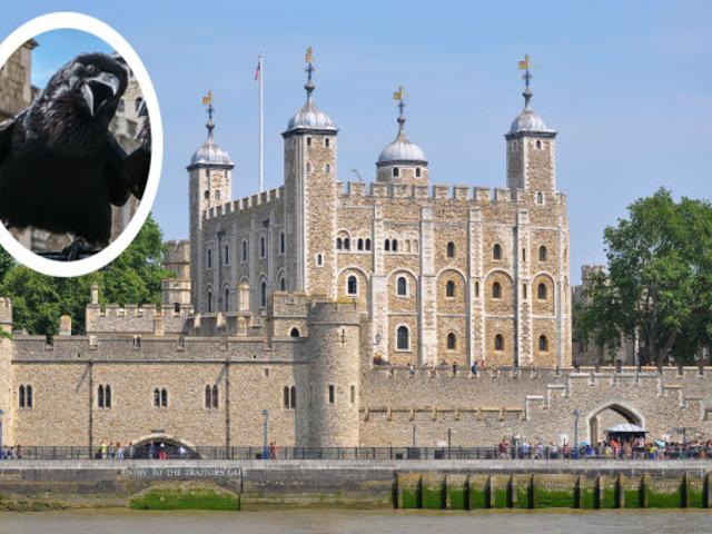 A Tower fekete őrei