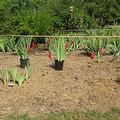 Milyen legyen a kert stílusa? Milyen kerti növényeket válasszunk?