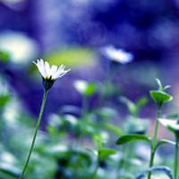 Tippek a kerti növények helyének megtervezéséhez