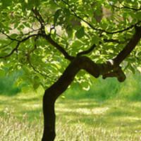 Kerti növények: milyen fát válasszunk a kertbe?