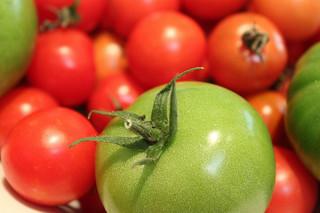 A kerti veteményes terményei