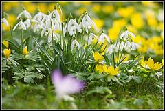 Kertépítés tavasszal