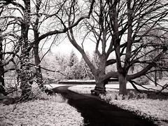 Kerttervezés - faválasztás - fa télen