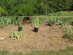 A kerti növények kiválasztása