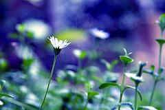 Hasznos tanácsok a kerti növények ideális helyválasztásához