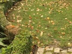 Őszi füvesítés
