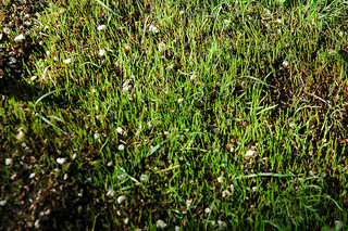 Tavaszi fűmagos füvesítés