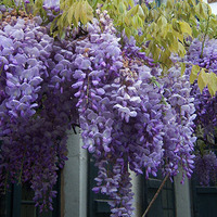Mediterrán kerti növények, melyet még a szomszédod is megirigyelne!