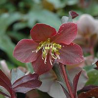 Virágzó növények télen – nem csak a kertben