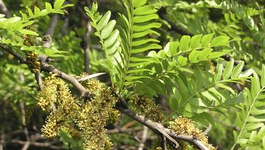 Őszi termésükkel díszítő fák és cserjék