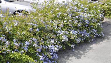 Ültessünk dézsás növényeket a teraszra!