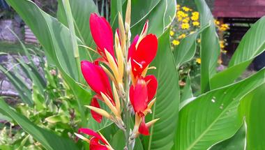 6 gyorsan fejlődő, jól takaró növény