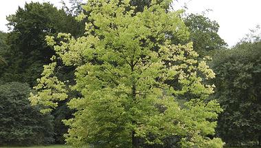 Ősszel és télen ehető termésű fák és cserjék