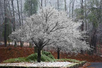 tree-photo-ice-frozen-rain-covered-md.jpg