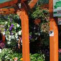 A Borhy kertészet