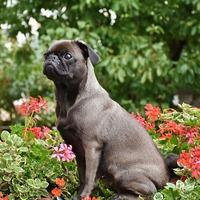 Ötletek a békés kutya+kert kombinációhoz