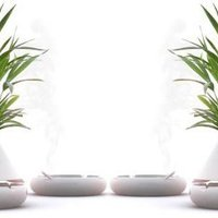 Passzív dohányos növények