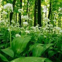 Vadvirág-verseny és vadvirágos kertek