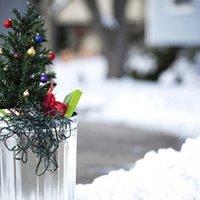 Ünnep utáni karácsonyfa sorsok