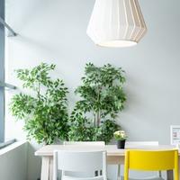 Mi legyen a szobanövényekkel télen?