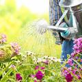 Mit kívánnak a növények hőségriadó idején?