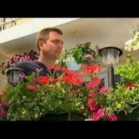 Egynyári virágok a balkonon