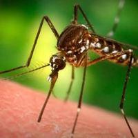 Átkozott szúnyogok!