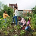 Közösségi kertek