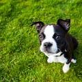 Gyeppusztító kutyapisi, és amit tenni lehet ellene