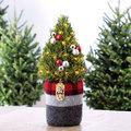 Karácsonyfák a fenyőn túl