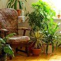 Három ádáz szobanövény kártevő!
