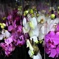 Öt dolog, amit ne tegyél az orchideáddal!