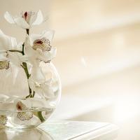 Ezeket ne tedd az orchideáddal!