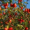 A legszebb őszi bogyósok!