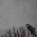 Madárlátta kertek