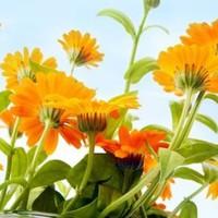 A nyár kedvenc virága...