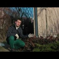 Tavaszi kertbeindító munkák