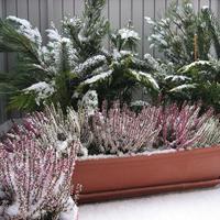 Hogyan óvjuk meg növényeinket a fagykároktól?