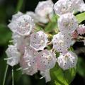 7 különleges díszcserje, mely izgalmas dísze lehet a kertnek!