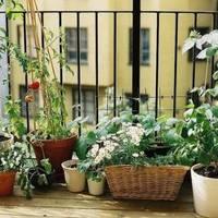 Balkonkertészkedés kezdőknek öt lépésben