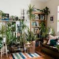 A szobanövények betegségeiről