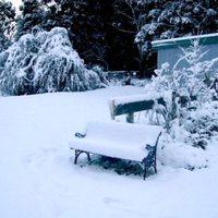 Örökzöldek védelme a hó ellen