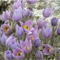 Programajánló - Tavaszi Virágnapok