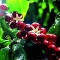 Kávé és pótkávé a kertben